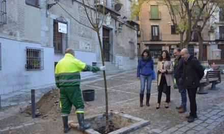 El Ayuntamiento planta nuevos árboles en las plazas de San Vicente y San Justo y el paseo de San Cristóbal
