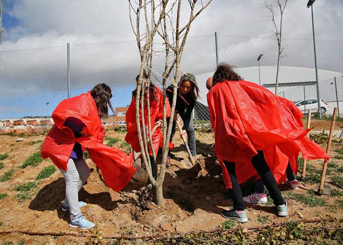 Alumnos del Colegio Valparaíso colaboran en la plantación de árboles organizada por el Ayuntamiento para mejorar el barrio