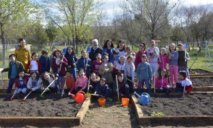 El Consistorio impulsa el primer parque y huerto del colegio 'La Candelaria' con la plantación de 200 brotes de hortalizas y frutas
