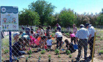 """Nueva plantación en el huerto del colegio """"La Candelaria"""" de Azucaica dentro del programa municipal """"Apadrina un parque"""""""