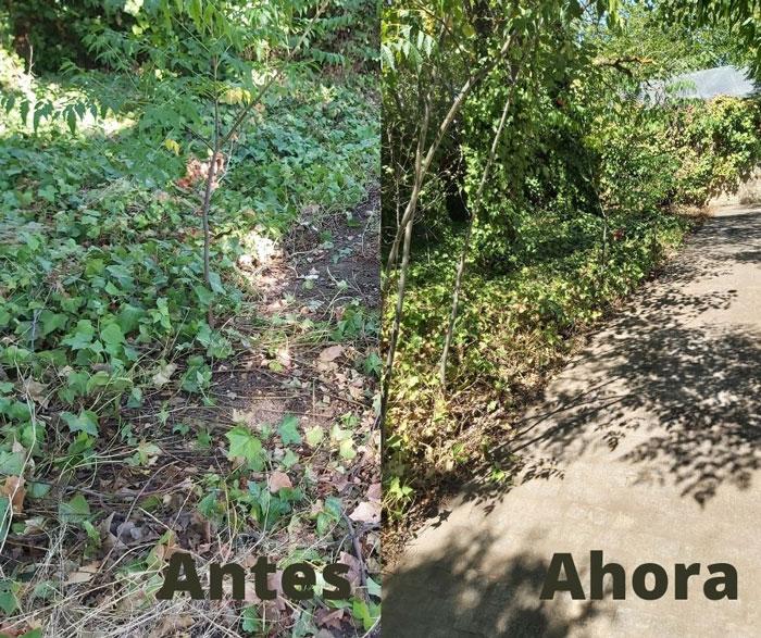 El Ayuntamiento de Toledo continúa con las labores de limpieza y desbroce en entornos como San Pedro el Verde, Más del Ribero o San Lucas